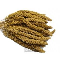 Senegalské proso žluté klasy 100 g