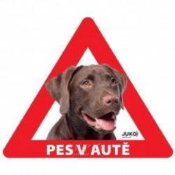 samolepka-Pes v autě-sklo ze vnitř- LABRADOR hnědý-13613