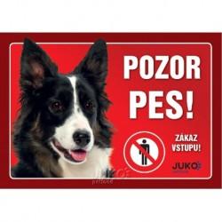 samolepka-Pozor Pes-BORDER KOLIE-13621