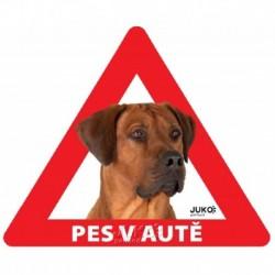 samolepka-Pes v autě venkovní-RHODÉSKÝ RIDGEBACK-13899