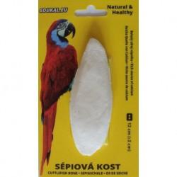 SÉPIOVÁ kost na kartě-cca 12cm-1KS-15365